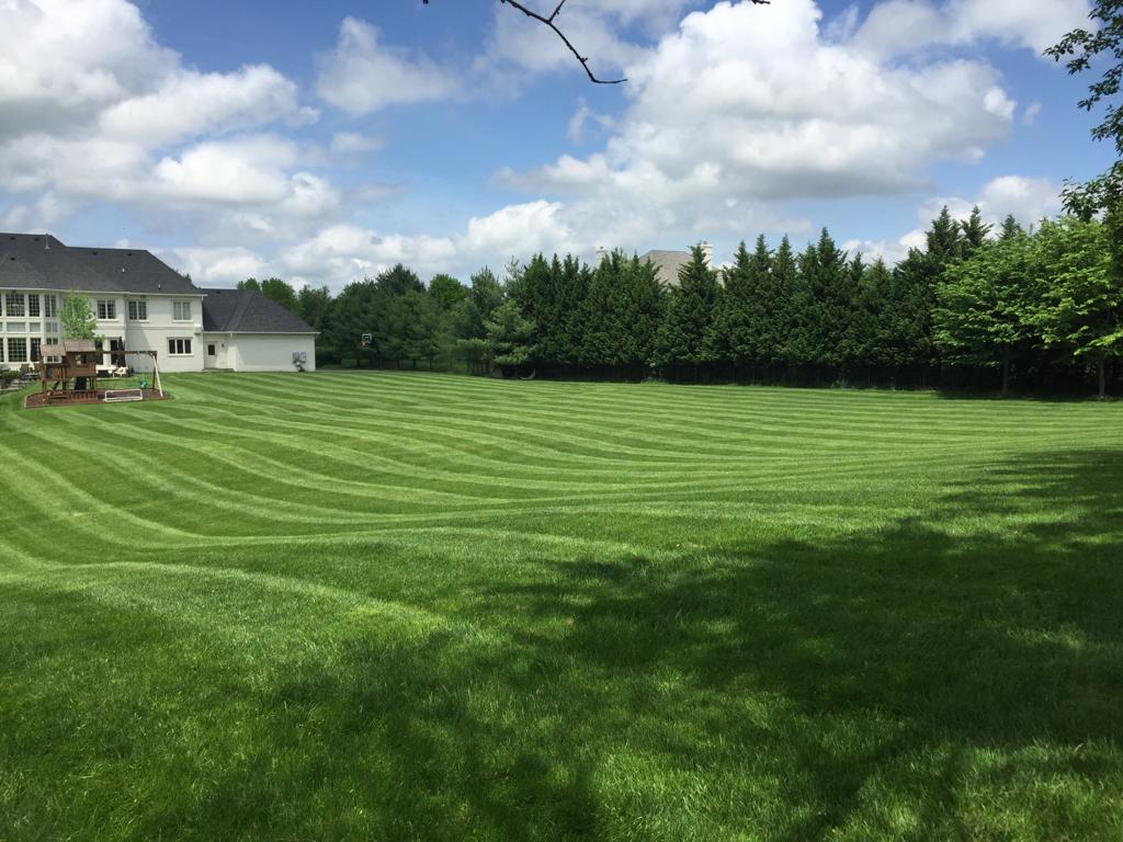 lawn-mowing-10