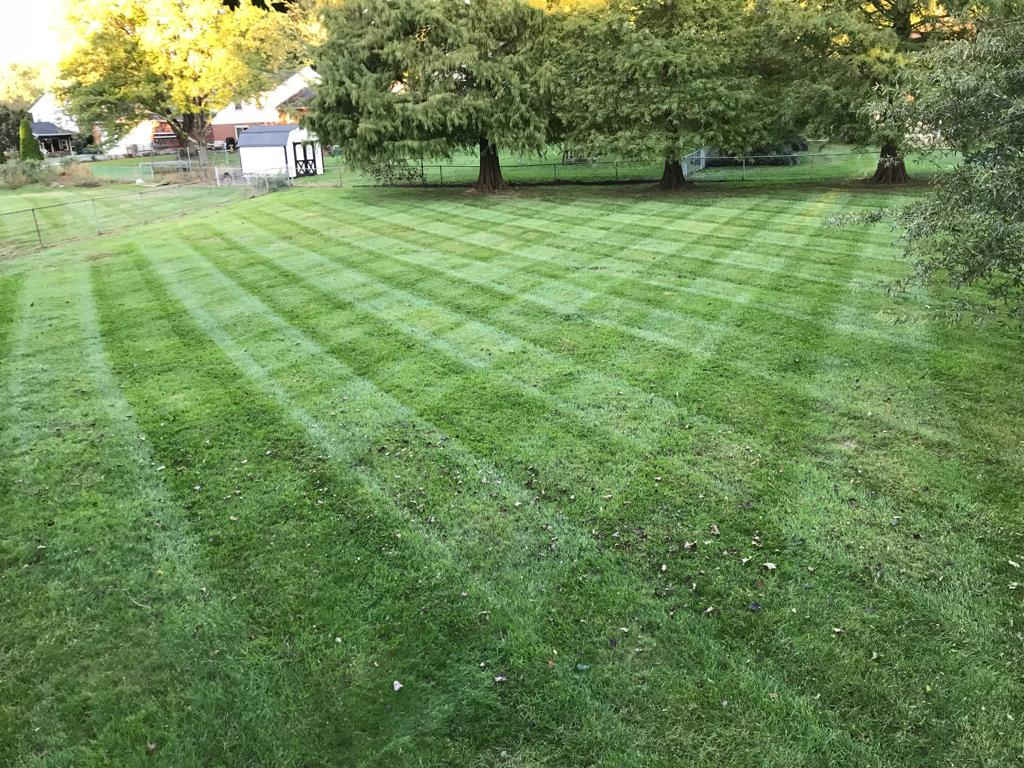 lawn-mowing-11